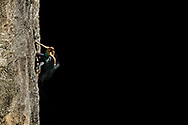 Kate Rutherford climbs Keeper of the Flame (5.13a) , one of Yosemite's finest and exposed sport routes.