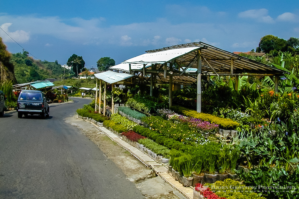 Indonesia, Java, Bandung. Wisata Bunga, the flower road above Bandung.