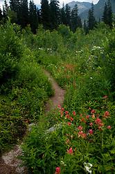 Red Paintbrush, Alpine Lakes Wilderness, Mt. Baker-Snoqualmie National Forest, Washington, US