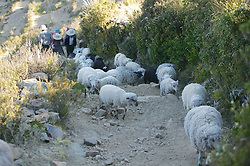 People And Sheep