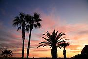 Sunset with palm tree, Arizona desert