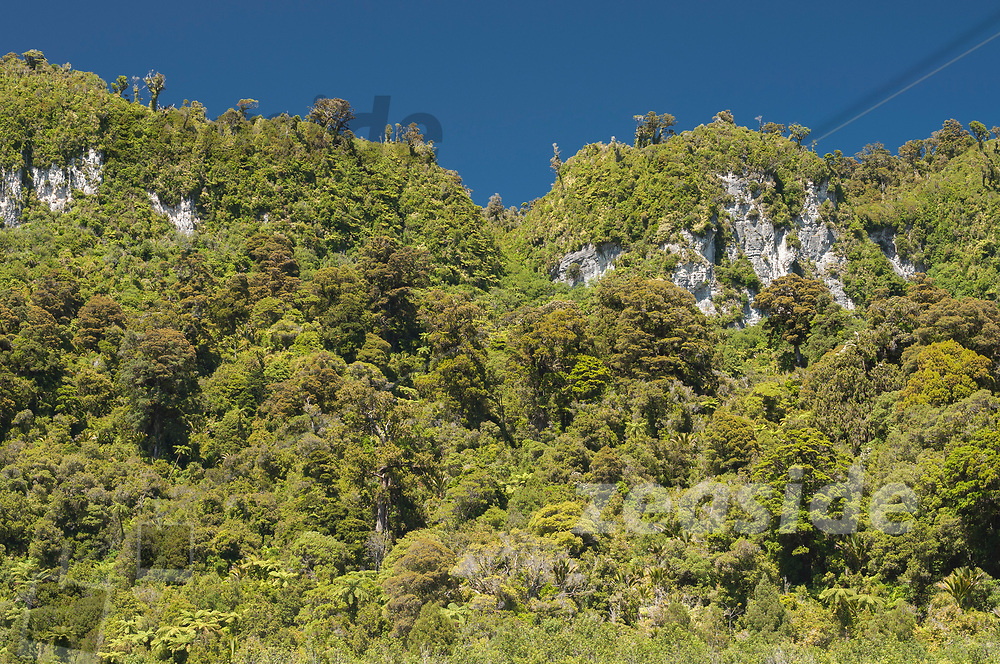 Native forest rising from the steep limestone cliffs of the Fox River canyon.