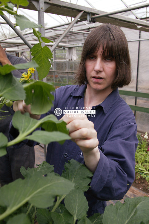 Woman with learning disability at work at Brook Farm; Linby; tending plant in greenhouse,