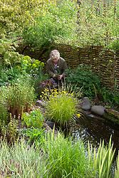 Carol planting Lychnis flos-cuculi var. albiflora near the pond