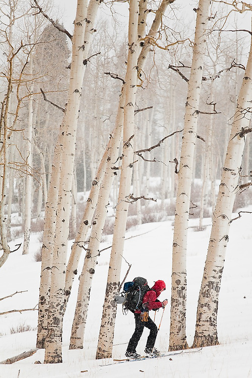 Jeff Wanner skis past a grove of aspen trees in Uncompahgre National Forest, Colorado.
