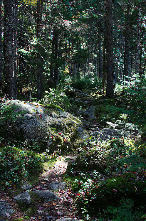 Hiking trail through mossy woods, Baxter State Park, Maine.