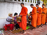 """12 MARCH 2016 - LUANG PRABANG, LAOS:  Tourists give alms to Buddhist monks during the morning tak bat in Luang Prabang. Luang Prabang was named a UNESCO World Heritage Site in 1995. The move saved the city's colonial architecture but the explosion of mass tourism has taken a toll on the city's soul. According to one recent study, a small plot of land that sold for $8,000 three years ago now goes for $120,000. Many longtime residents are selling their homes and moving to small developments around the city. The old homes are then converted to guesthouses, restaurants and spas. The city is famous for the morning """"tak bat,"""" or monks' morning alms rounds. Every morning hundreds of Buddhist monks come out before dawn and walk in a silent procession through the city accepting alms from residents. Now, most of the people presenting alms to the monks are tourists, since so many Lao people have moved outside of the city center. About 50,000 people are thought to live in the Luang Prabang area, the city received more than 530,000 tourists in 2014.      PHOTO BY JACK KURTZ"""