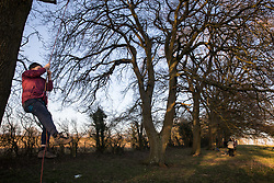 Great Missenden, UK. 28th February, 2021. An activists climbs one of a row of oak trees along Leather Lane. Environmental activists from HS2 Rebellion have recently occupied the trees and set up a camp nearby following local reports that around twelve of the oak trees are threatened with felling for temporary works associated with the HS2 high-speed rail link. Credit: Mark Kerrison/Alamy Live News