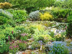 The rock garden and upper pond at Glen Chantry. Plants include ochids, corydalis, Carex elata 'Aurea', Alchemilla mollis, Ligularia 'Desdemona'. Design: Sue and Wol Staines