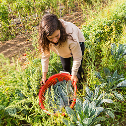 A woman harvests kale at Barker's Farm in Stratham, New Hampshire.