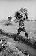 MALI. Tondiby. 3/02/1987: Transporting the straw of a previous rice harvest on an irrigated plot of land run by a cooperative.
