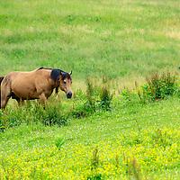 TRT Quarter Horses