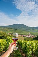 Enjoying a glass of wine among the grape vines along the Route des Vins (Wine Route) in Alsace, France.