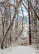 Trees, trail, gate, all snow covered on New Year's <br /> Day, 2019.