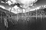 The flooded nesting grounds of the Scarlet Macaw, the result of the controversial Chalillo hydro-electric dam built in 2003. This is the only known area in Belize where Scarlet Macaws nest.