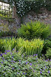 Iris pseudacorus 'Variegata' with geranium and ferns in a shady corner at Sissinghurst Castle Garden