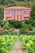 Vineyard. Chateau de Jau, Cases de Pene, Roussillon, France