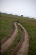 Winding road with acacia tree in the distance, Ngorongoro Crater, Tanzania