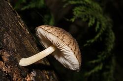 Te Urewera National Park, unknown mushroom