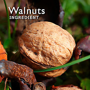 Walnuts Pictures   Walnuts Photos Images & Fotos