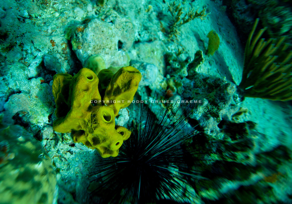 Underwater in Antigua, Caribbean.