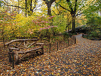 A rustic bench alongaA woodland path in the Ramble of Central Park