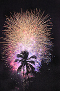 Fireworks  explode over a Miami Beach palm tree on New Year's Eve 2008-2009 at 12:03 a.m.