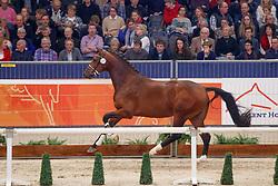 544, Kayne<br /> KWPN Stallionshow - 's Hertogenbosch 2018<br /> © Hippo Foto - Dirk Caremans<br /> 02/02/2018
