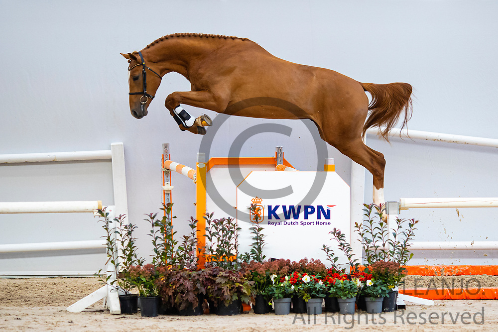 New Quickly DN<br /> KWPN Select Sale 2020 <br /> © DigiShots