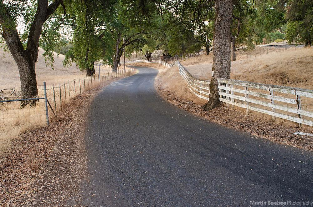 Rural road winding through oak trees, Shingle Springs, El Dorado County, California