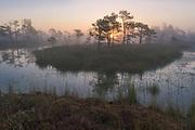 Wetlands and raised bogs in various seasons, Latvia Ⓒ Davis Ulands   davisulands.com