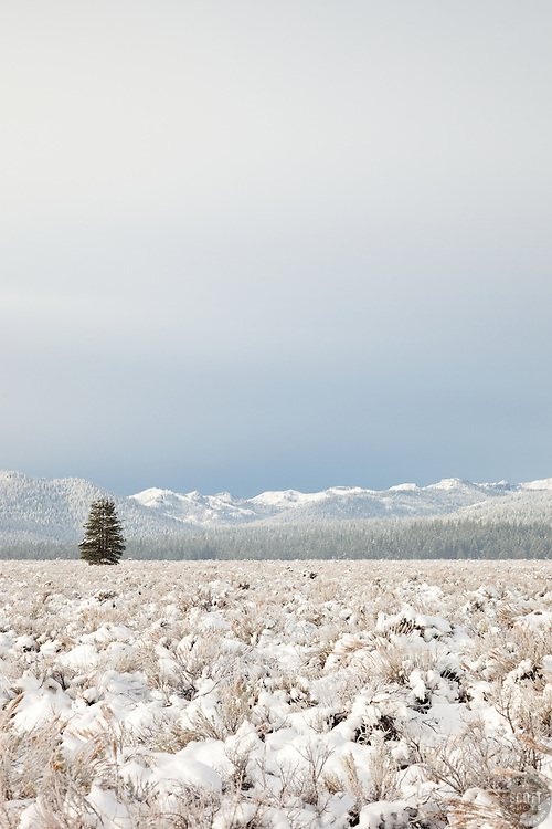 """""""Snowy Martis Valley 5"""" - Photograph of a lone tree in a snow covered Martis Valley in Truckee, California."""
