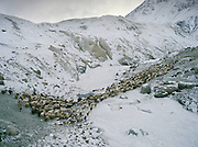 "Wakhi winter shepherds known as ""Shpunds"" arriving at their settlement of Kher Metek, on the edge of the Little Pamir. They often look over Kyrgyz sheep and yak herds for payment in animals. .Winter expedition through the Wakhan Corridor and into the Afghan Pamir mountains, to document the life of the Afghan Kyrgyz tribe. January/February 2008. Afghanistan"