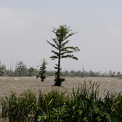 Water flows in from the Gulf of Mexico into the inland marsh in Venice, Louisiana, U.S., on Saturday, May 1, 2010. The BP Plc Deepwater Horizon drilling rig oil spill is threatening the marshlands along the eastern Louisiana coast.  Photographer: Derick E. Hingle.