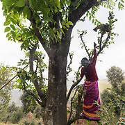 A woman trying to get a cat down from a tree. In the Himalaya.