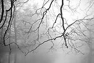 Tree branches descend in a winter fog over a creek running through Odense, Denmark. ©Brett Wilhelm