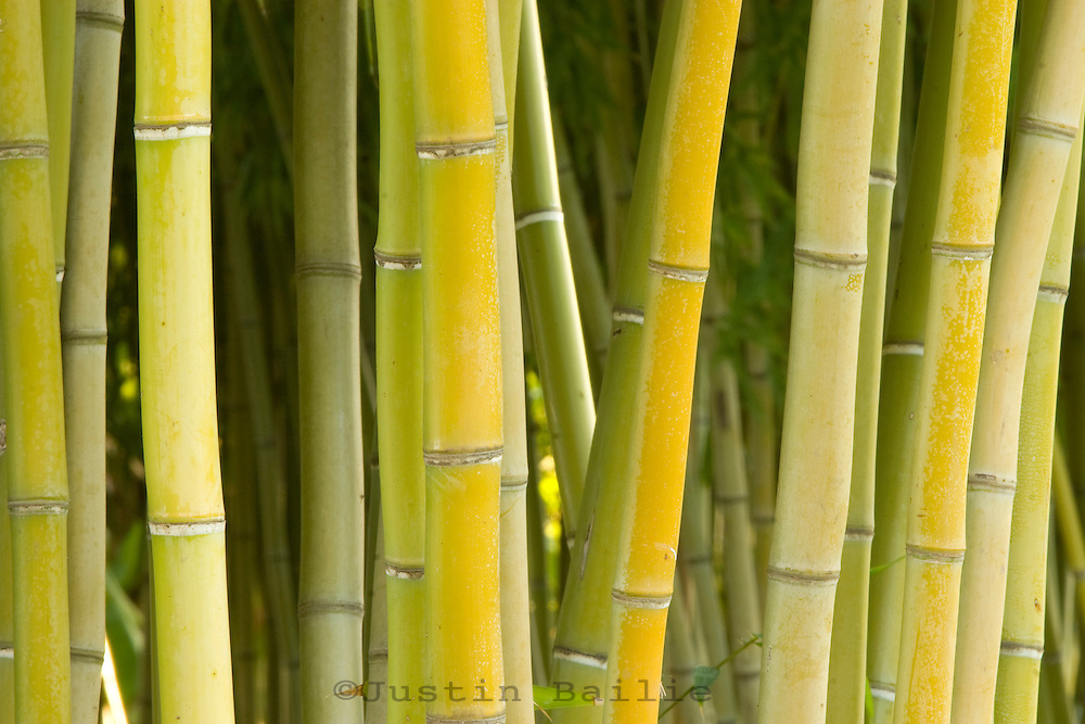Pattern shot of bamboo.