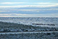 Winter sun on farmland