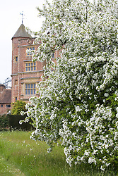 Blossom in the Orchard at Sissinghurst Castle Garden in spring with the Tower beyond