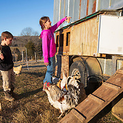 Bryce Shields collects eggs with her brother Braxton on the family's farm in Tazewell, Tennessee.  Nathan Lambrecht/Journal Communications