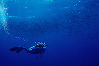 Dr. Sylvia Earle swims with a schools of chubs.