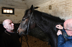 A horse is given an equine flu booster vaccination at the yard of trainer Philip 'Charlie' McBride in Newmarket.