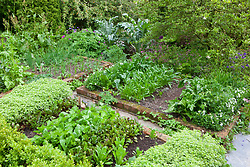 The vegetable garden at Glebe Cottage in early summer