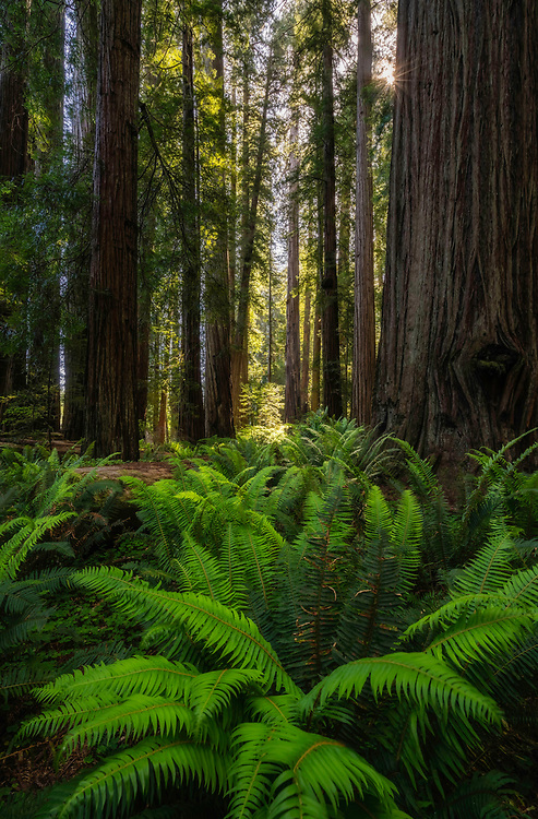Straight out of a fairytale. That's exactly how you feel walking quietly through the Redwood forests of Stout Grove in the Jedediah Smith Redwood State Park in Northern California.