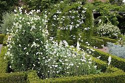 Sweet peas and solanum in the White Garden at Sissinghurst Castle