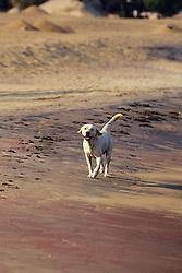 Dog On Beach At Livingstonia Hotel
