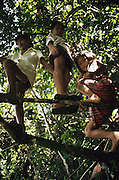 DAYAK CHILDREN, MALAYSIA. Sarawak, Borneo, South East Asia.Dayak, 'Kelabit', children playing in the forest. Tropical rainforest and one of the world's richest, oldest eco-systems, flora and fauna, under threat from development, logging and deforestation. Home to indigenous Dayak native tribal peoples, farming by slash and burn cultivation, fishing and hunting wild boar. Home to the Penan, traditional nomadic hunter-gatherers, of whom only one thousand survive, eating roots, and hunting wild animals with blowpipes. Animists, Christians, they still practice traditional medicine from herbs and plants. Native people have mounted protests and blockades against logging concessions, many have been arrested and imprisoned.