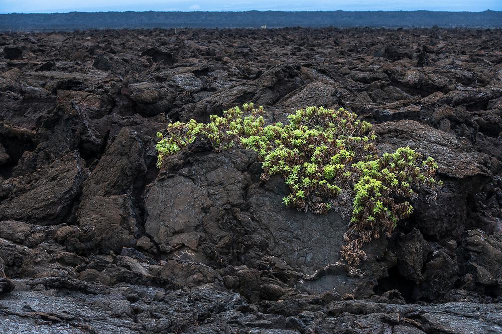 Scenic Punto Moreno<br /> Isabela Island<br /> Galapagos<br /> Ecuador<br /> South America<br /> ENDEMIC