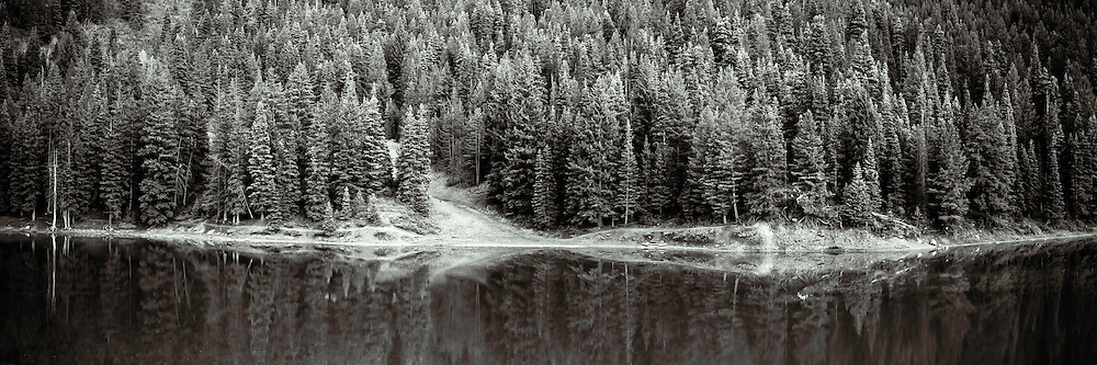 Panoramic view into the pine tree forest surrounding Tibble Fork Reservoir in American Fork Canyon on a warm Spring evening.