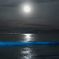 """BIOLUMINESCENCE in the heart of Ballinskelligs, Southwest Kerry, Ireland, overlooking Waterville. <br /> <br /> A natural phenomenon lights up the water of Ballinskelligs Beach, making the sea shine with a surreal blue light.<br /> <br /> The surreal scene arises not from magic, but from plankton that have evolved to glow in order to startle or distract fish and other potential predators. Some scientists call it the """"burglar alarm effect"""": by lighting up, the plankton draw even larger predators that, in turn, eat the animal threatening them. The phosphorescence only occurs when the microorganisms, which exist worldwide, are agitated – such as when the water crashes onto the shore, someone steps on the wet sand or a paddle hits the waves."""